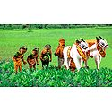 Indian Farmers Picture - Unframed Photo Print on Paper