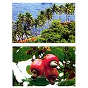 Bat Island and Ripe Cshewnuts, Goa, India - Set of 2 Postcards