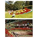 Floral Clock and Botanical Garden, Ooty - Set of 2 Postcards