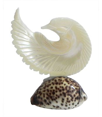 Shell Decoration Items