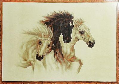 Three Wild Beauties Poster
