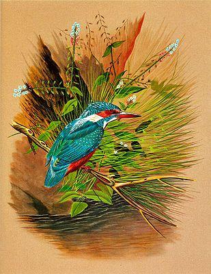 Colorful Kingfisher