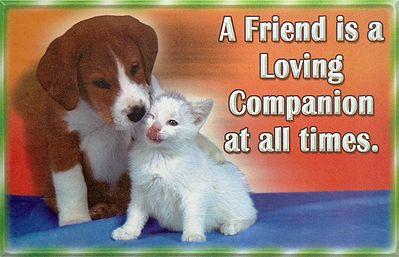 Loving Companion