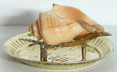 Conch On a Brass Stand