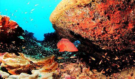 Marine Life of Lakshadweep