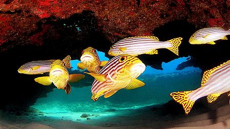 Marine Life of Lakshadweep