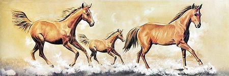 Galloping Beauties