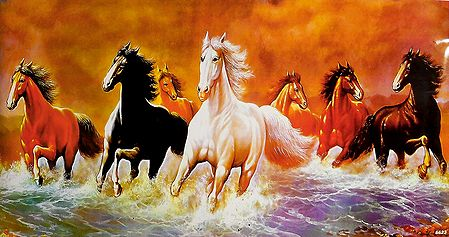 Graceful Horses