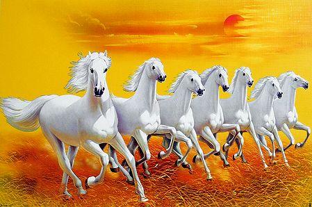 Graceful White Horses
