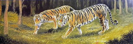 Tigers on the Prowl
