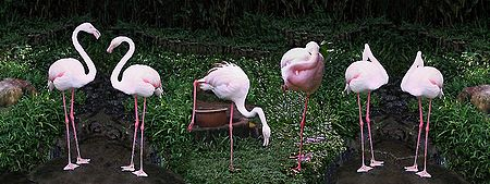 Get Together of Flamingos
