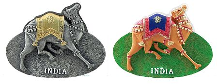 Camels - Set of 2 Magnets
