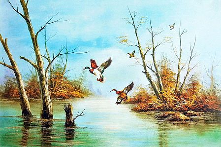 Colorful Birds Flying Near Pond