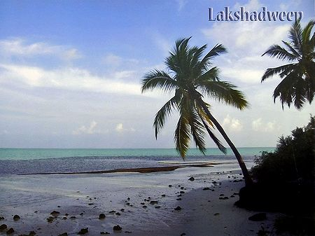 Palm Trees at Agatti Beach, Lakshadweep, India