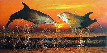Two Dolphins Dancing in the Ocean During Sunset