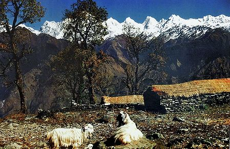 Panchchuli Range from Munsiyari, Kumaon - India  - Photo by R. C. Sah