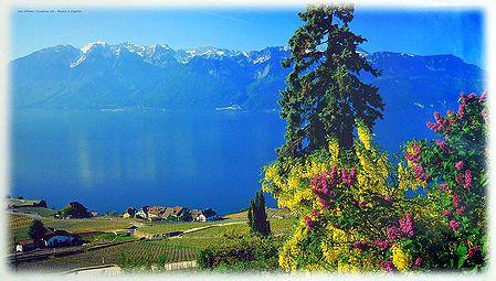 Lake Geneva - Switzerland - Photo by S.Eigstler