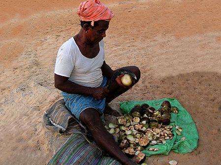 Coconut Seller from Mangalore -  Karnataka, India