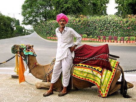 Lonely Traveler with Camel from Rajasthan