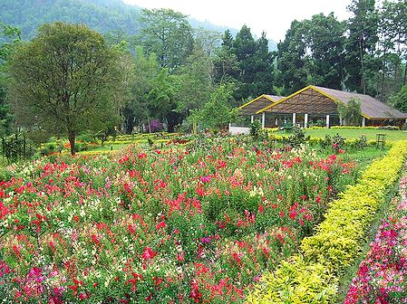 Saramsa Garden, Gangtok - East Sikkim, India