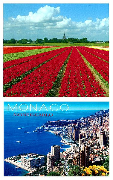 Tulip Field in Holland and Monaco - Set of 2 Postcards