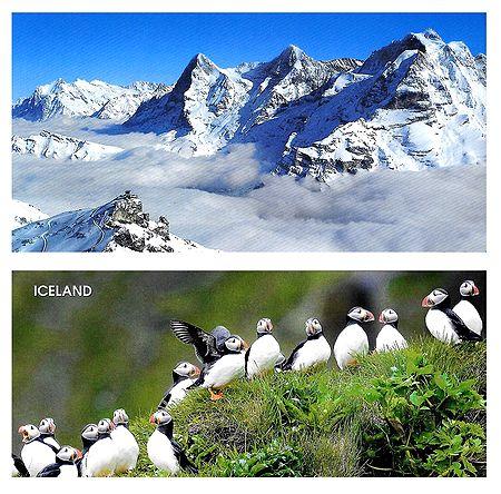 Swiss Alps, Switzerland & Puffin Birds, Iceland - Set of 2 Postcards