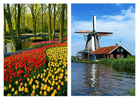 Keukenhof Tulip Garden and Windmill, Netherlands - Set of 2 Postcards