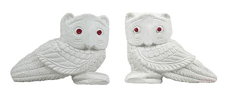 Pair of Owl