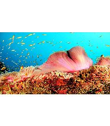 Corals of Lakshadweep