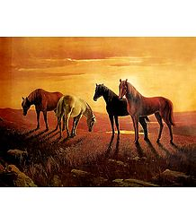 Graceful Horses - Poster