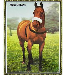 Buy Horse Poster