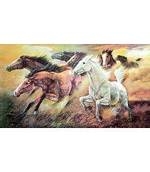 Buy Online Horse Poster