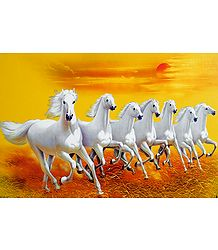 Graceful White Horses