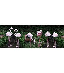 Flamingos - Photographic Print