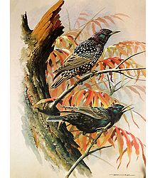 Shop Online Bird Poster
