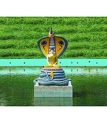 Buy Buddha Photo
