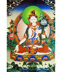 Buy White Tara - Thangka Poster