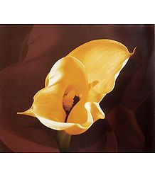 Buy Online Yellow Anthurium Poster