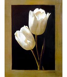 Buy White Tulips Poster