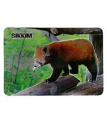Red Panda - Metal Magnets