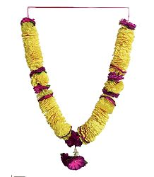 Yellow with Purple Cloth Garland