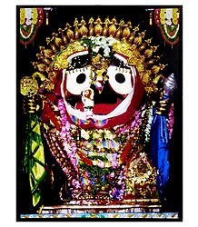Jagannathdev Picture Laminated on Hardboard