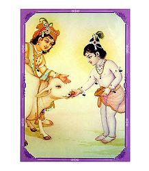 Krishna Balaram and Shiva - Double Sided Laminated Poster