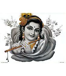 Krishna inside Rose