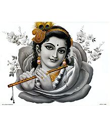 Krishna inside Rose