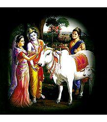 Radha Krishna and Balaram Performing Govardhan Puja