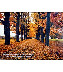 Colors of Autumn - Poster - Shop Online