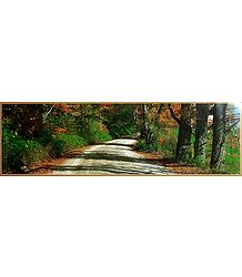 Forest Path - Poster