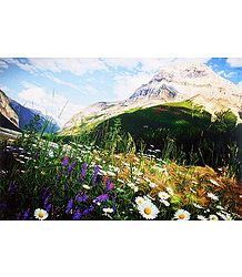 Wild Flowers - Paper Poster