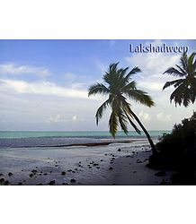 Palm Trees at Agatti Beach, Lakshadweep, India